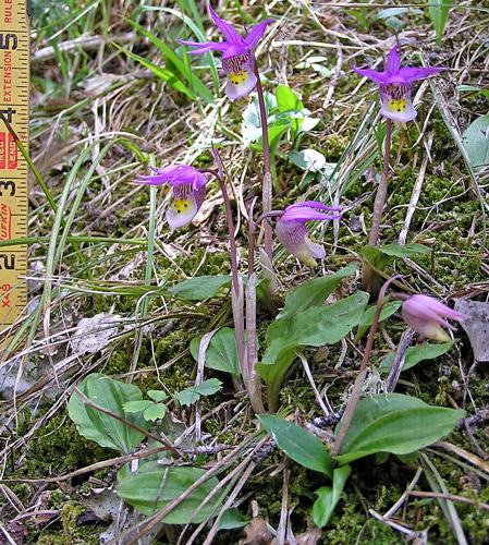 Форуми за цветя flowersnet info