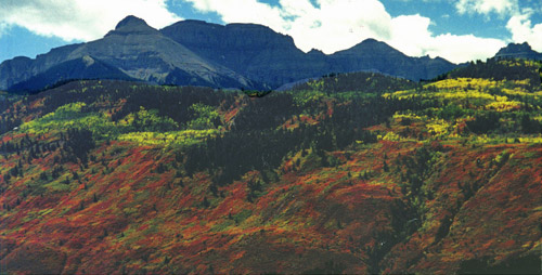Fall Oaks and Sneffels