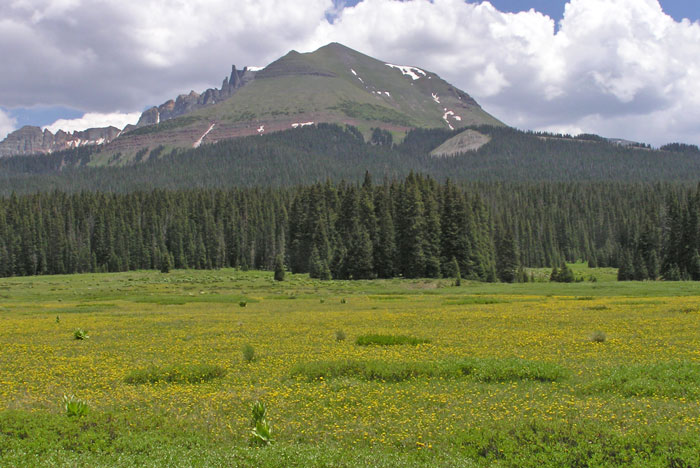 Sheep Mountain and spring wildflowers